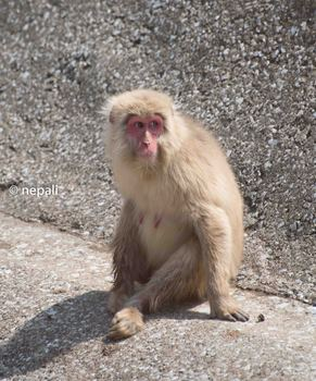 AMR_3658脇野沢の猿.jpg
