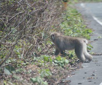 AMR_3767野生の猿.jpg