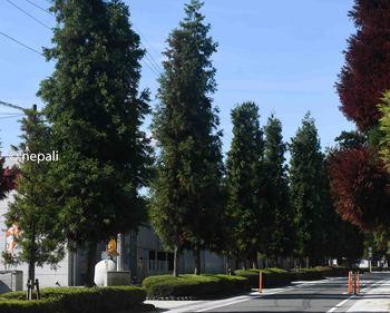 DSC_0014杉並木ロゴ入り.jpg