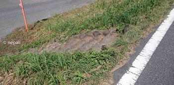 DSC_0113岩鼻樋管前の石段.jpg