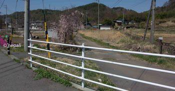 DSC_2566旧道入口.jpg