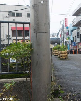 DSC_3033帷子橋.jpg