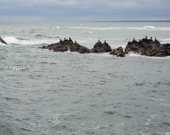 DSC_3190平磯海岸.JPG
