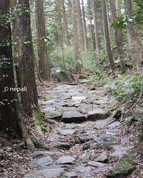DSC_3604江戸時代の石畳.jpg