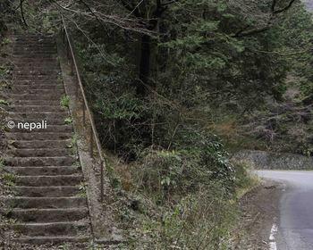 DSC_3653階段を上る.jpg