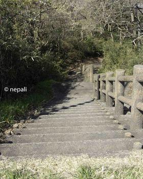 DSC_3851旧道下り階段.jpg