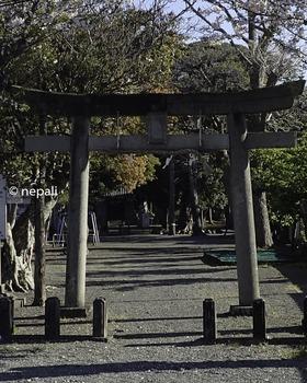 P4130028三島神社.jpg